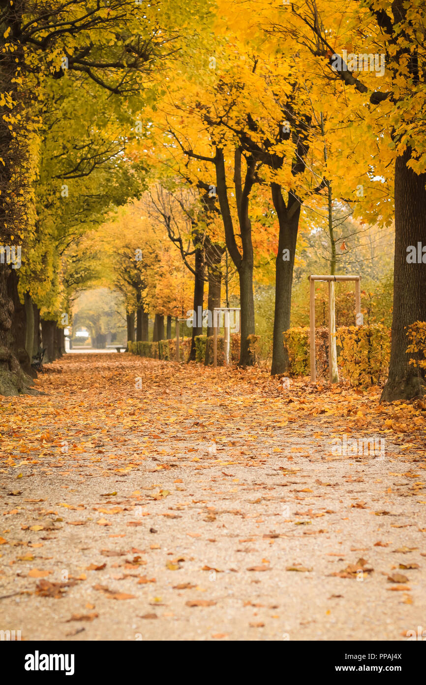 Beautiful Romantic Alley In A Park With Colorful Trees And Sunlight Autumn Natural Background Stock Photo Alamy