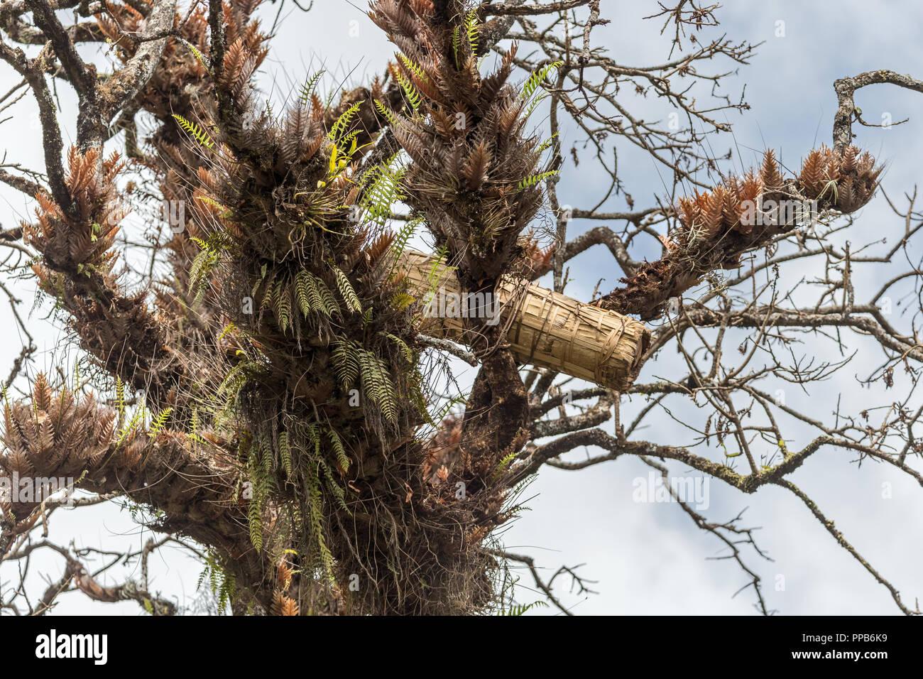 Beehive, Bale Mountains, Ethiopia - Stock Image