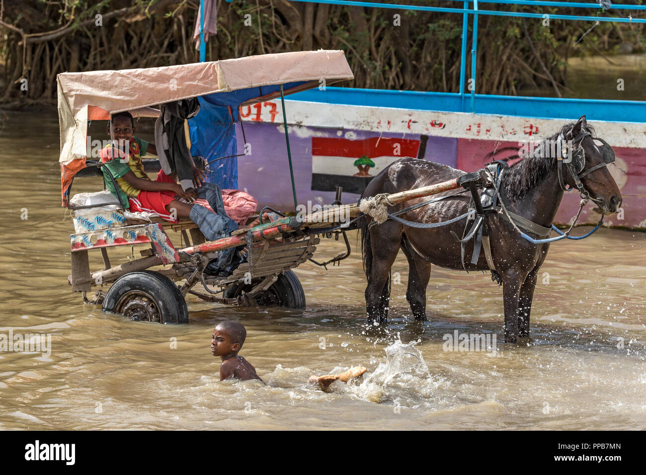Cooling off, Lake Ziway, Ethiopia - Stock Image