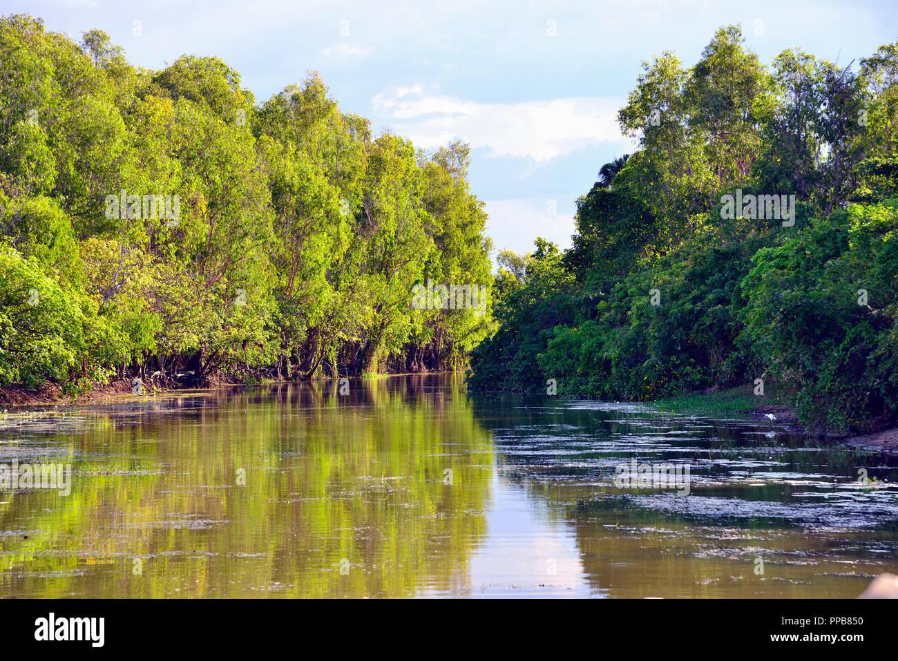 Yellow Water Billabong, Kakadu National Park, Northern Territory, Top End, Australia Stock Photo