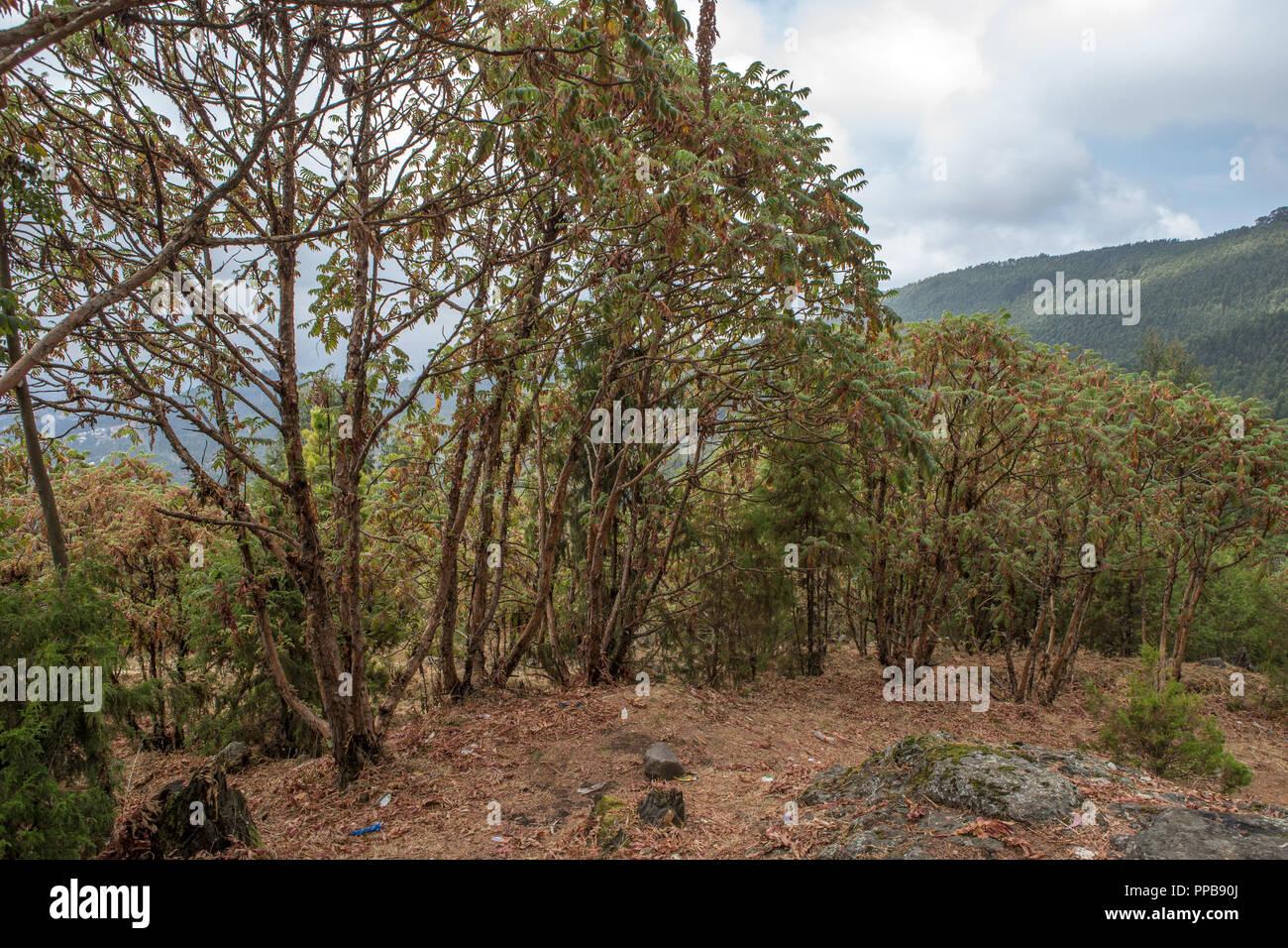 Mount Entoto, Ethiopia - Stock Image
