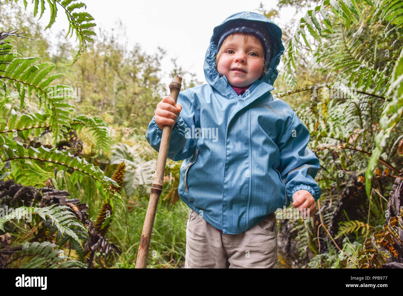 Little girl hiking in El Bosque Encantado, temperate rainforest with moss and lichen, Carretera Austral, Queulat National Park - Stock Image