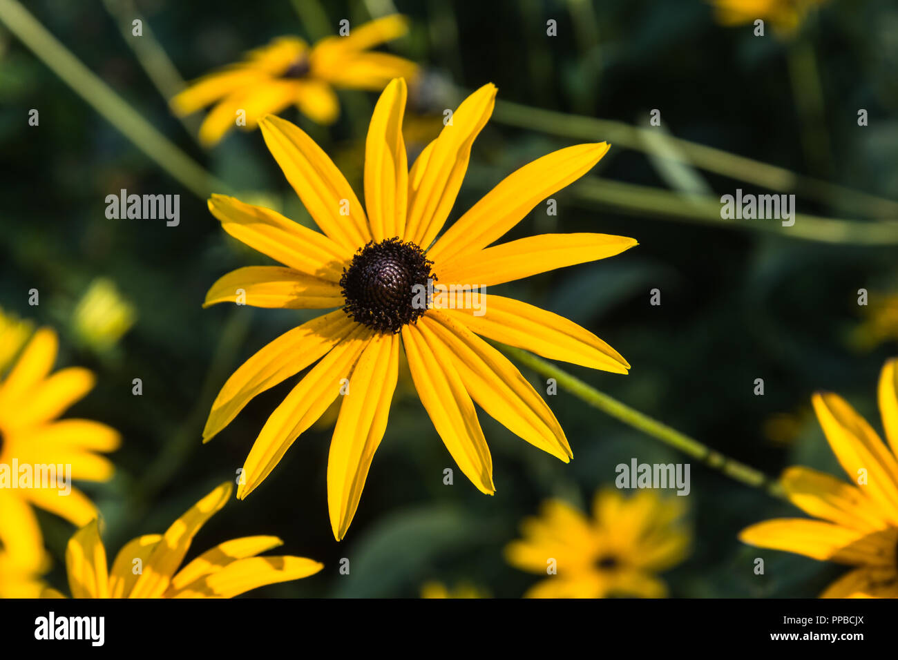 Daisy Like Flower Stock Photos Daisy Like Flower Stock Images Alamy