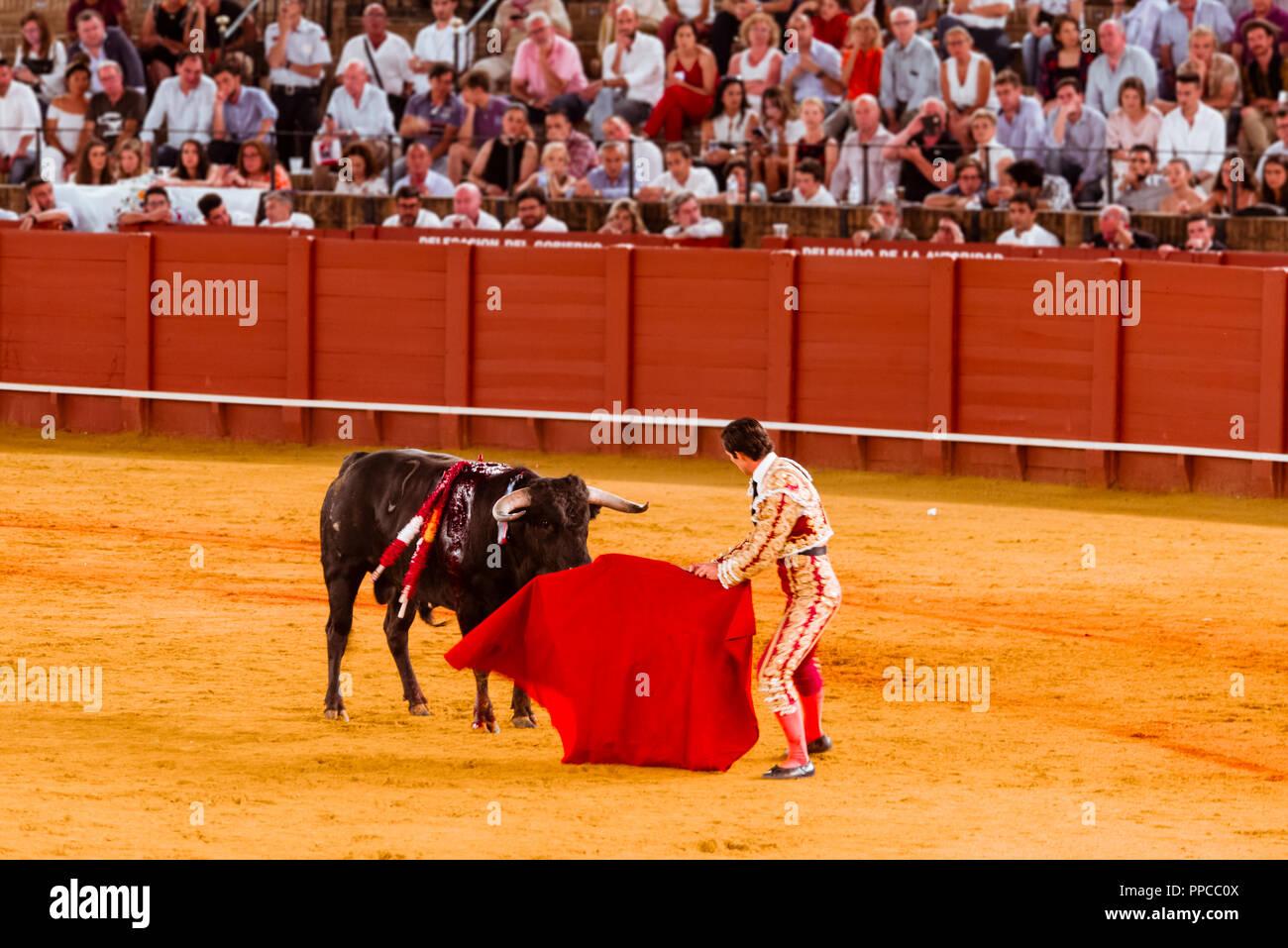 Bull stands in front of Matador, Torero or Toureiro in traditional clothing, bullfighting, bullring Plaza de Toros de la Real de - Stock Image