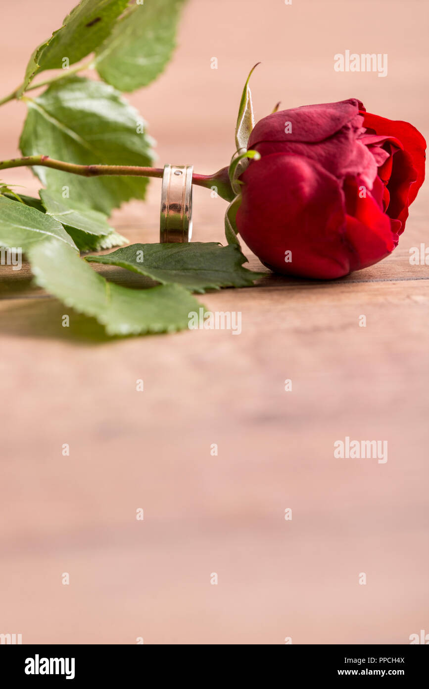 Romantic Engagement Ring On A Stem Of Single Fresh Red Rose Symbolic