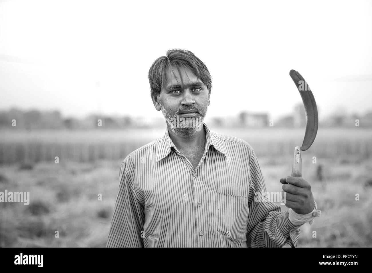 Black & white portrait of Indian farmer in wheat field crop carrying sickle on his shoulder & looking at camera. - Stock Image