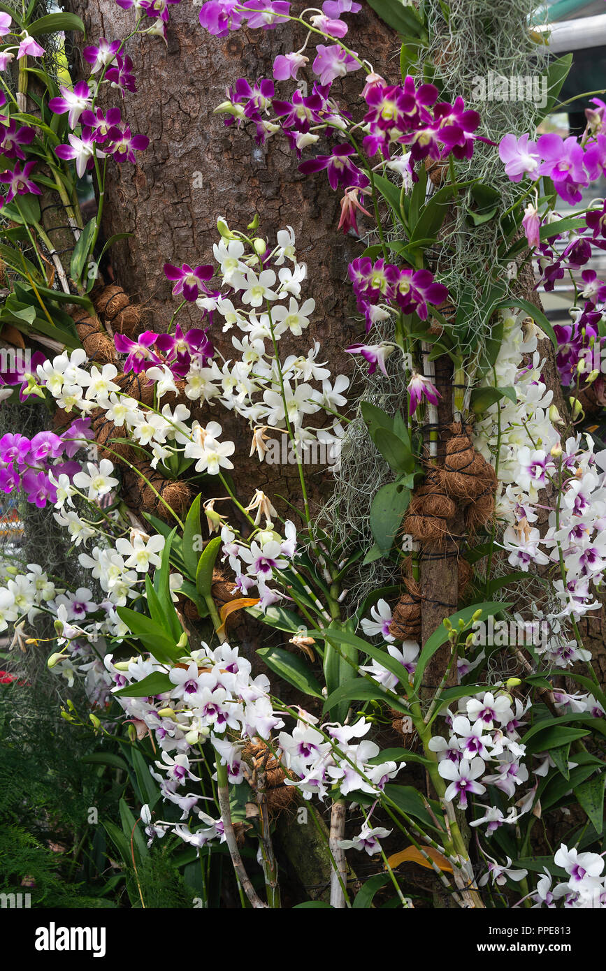 A Beautiful Display Of Purple Pink And White Orchid Flowers