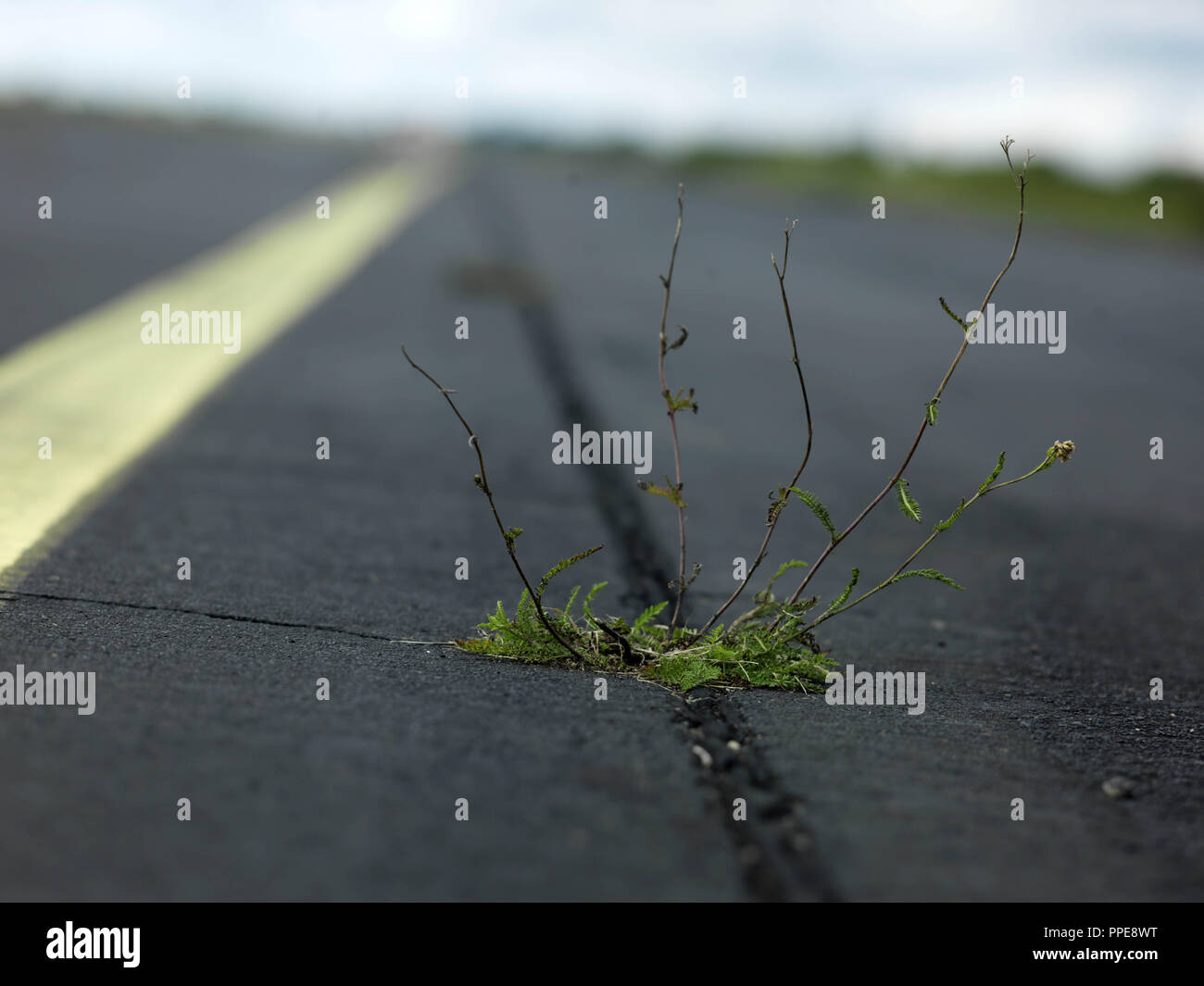 Grass growing on an old runway at the Fuerstenfeldbruck Air Base. - Stock Image