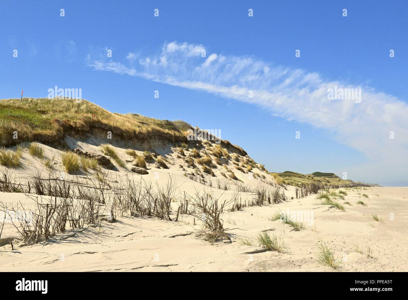 Partially destroyed dune belt with significant demolition edge in the west of the East Frisian Island Juist, 28 June 2018 | usage worldwide Stock Photo