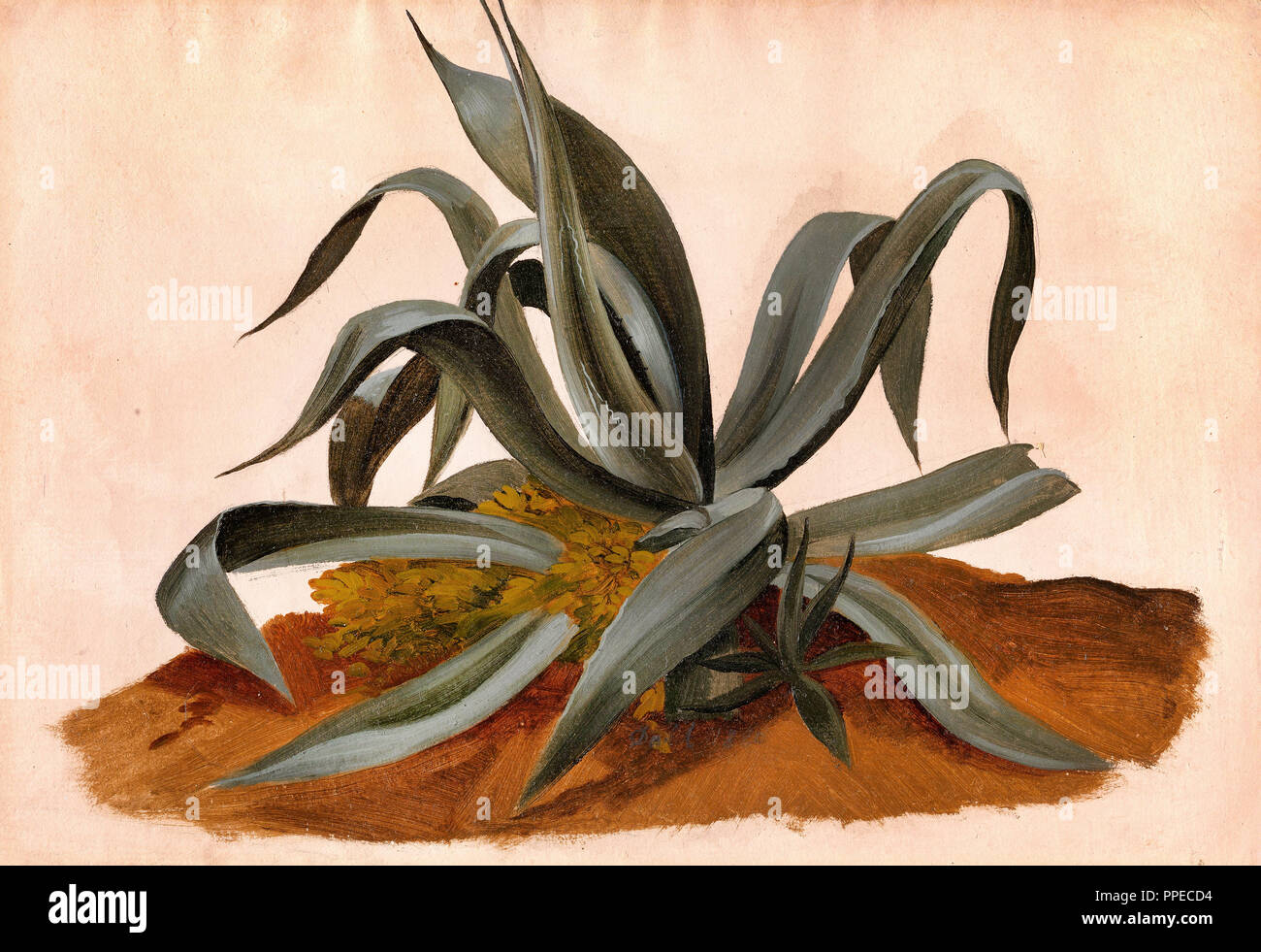 Johan Christian Dahl - Study of an Agave 1820 Oil on canvas. National Gallery of Norway, Oslo, Norway. - Stock Image