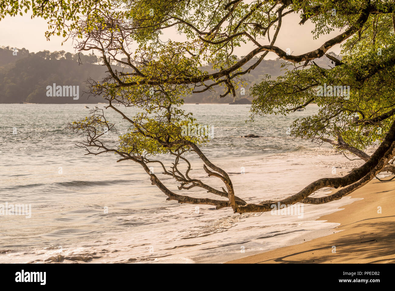 Beach scenes, Corcovado National Park, Osa Peninsula, Costa Rica - Stock Image