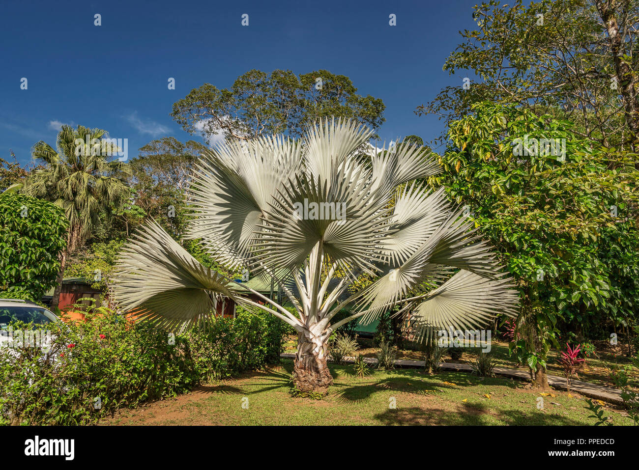 Palm Trees, Costa Rica - Stock Image