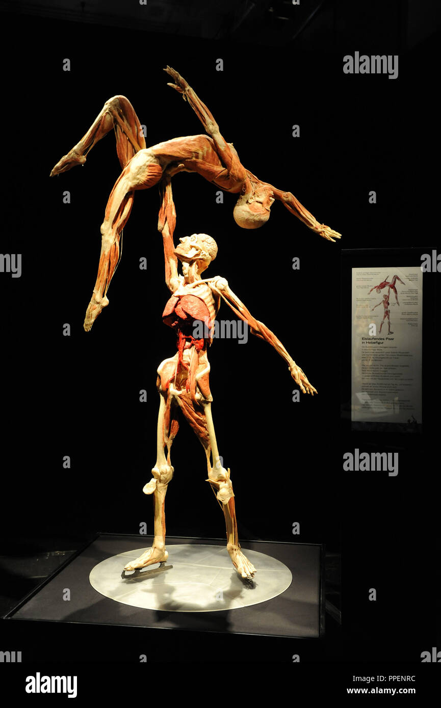 Preserved Artists In The Body Worlds Exhibition On The Topic The Cycle Of Life In The Small Olympic Hall Stock Photo Alamy
