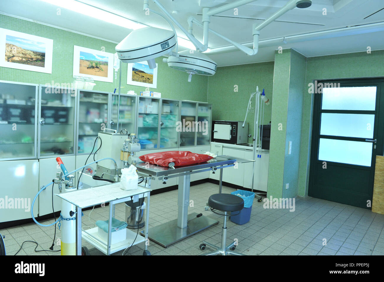 Operating room in the veterinary practice at Hellabrunn Zoo in Munich. - Stock Image