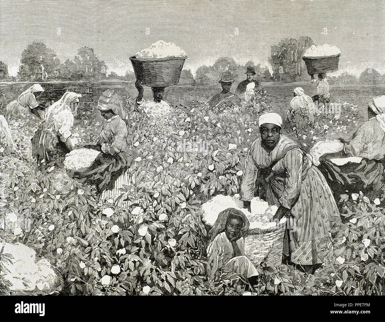 United States. Picking cotton. Engraving 1878 Stock Photo ...