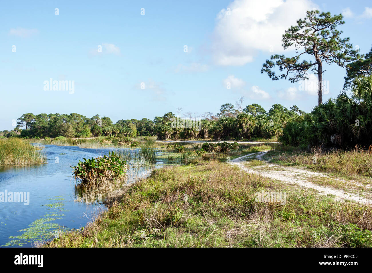 West Palm Beach Florida Winding Waters Natural Area wetlands ecosystem water - Stock Image