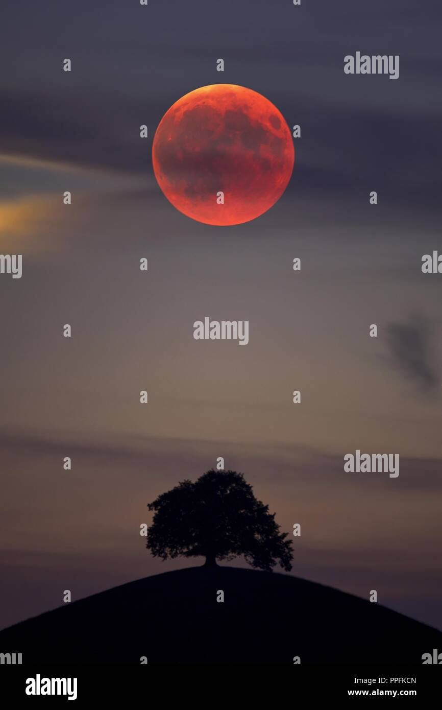 Bloodmoon, total lunar eclipse, double exposure with tree on moraine hill, Hirzel, Canton of Zurich, Switzerland - Stock Image