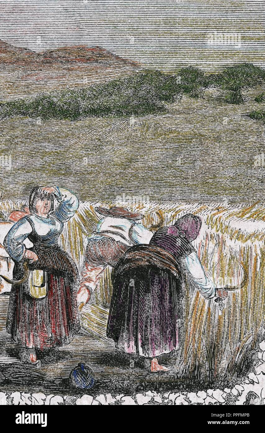 Harvesting of wheat. 19th century. Colored engraving. Stock Photo