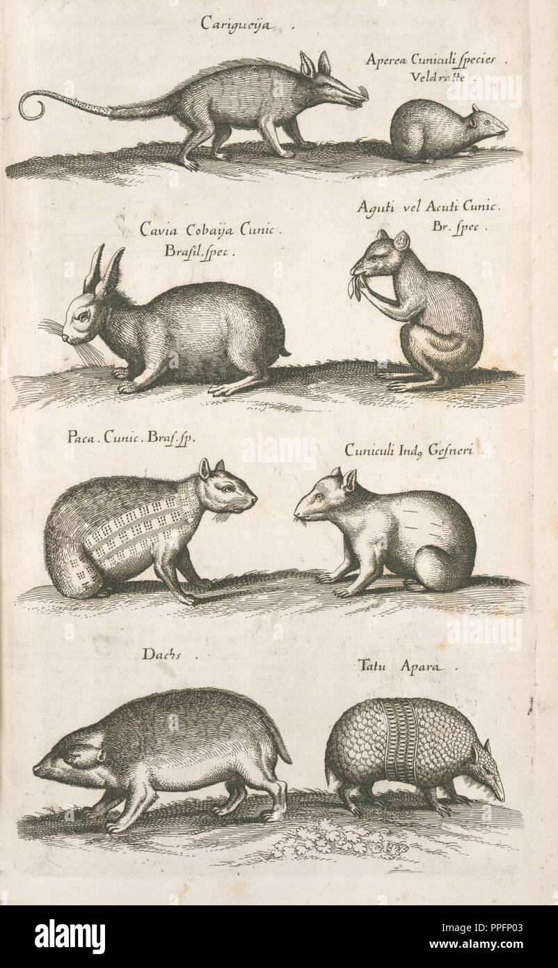 extinct or fantastical animals - Stock Image