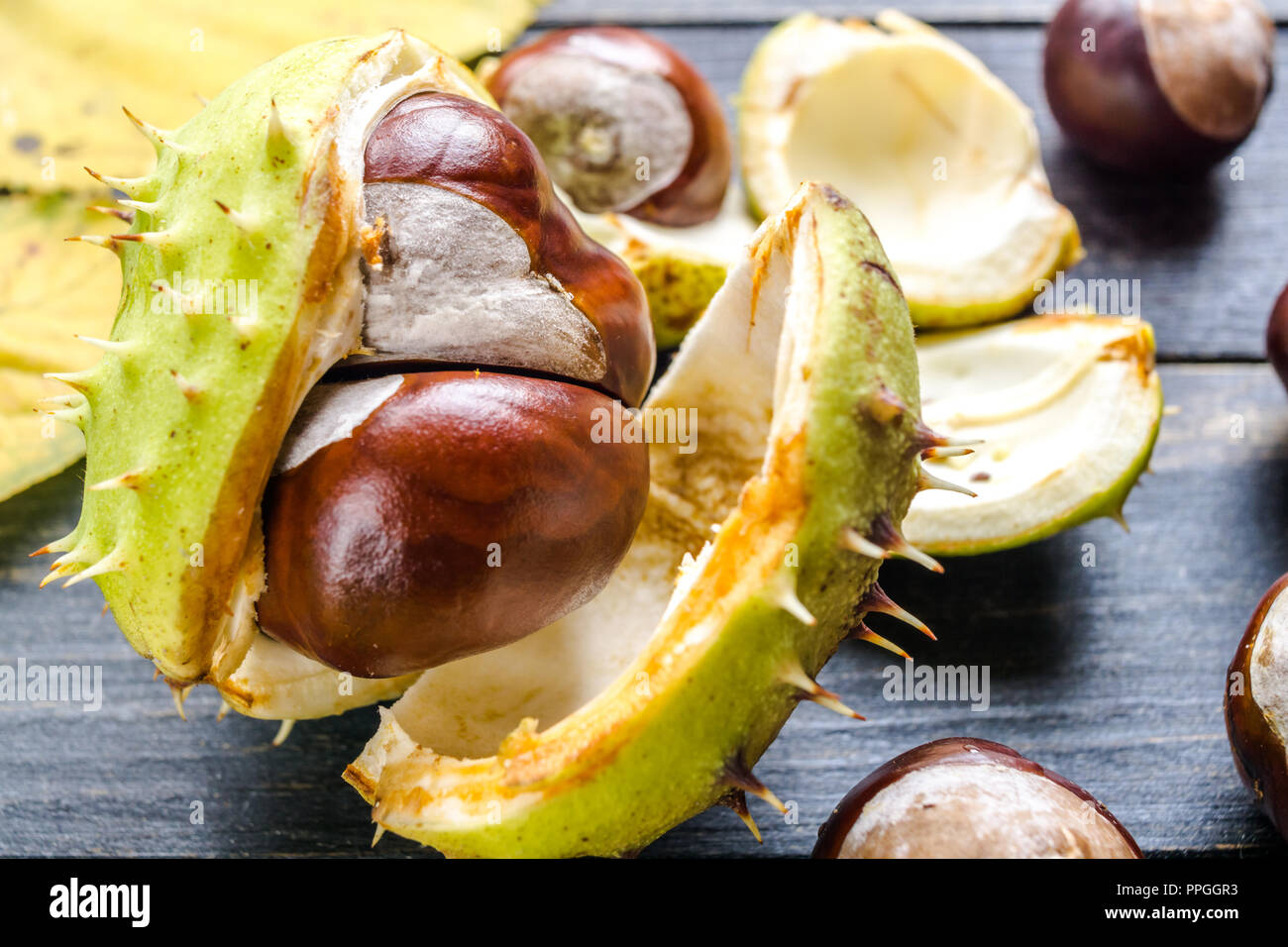 Non edible horse chestnuts on wooden table close up - Stock Image