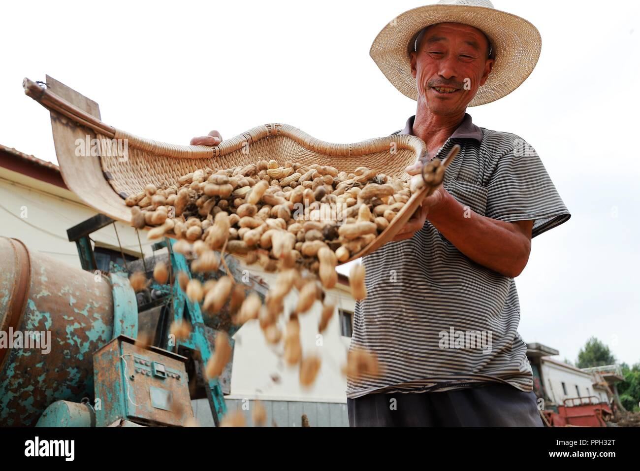 Qingdao, China's Shandong Province. 25th Sep, 2018. A farmer airs newly-harvested peanuts in Taqiao Village of Qingdao City, east China's Shandong Province, Sept. 25, 2018. Credit: Wang Peike/Xinhua/Alamy Live News - Stock Image