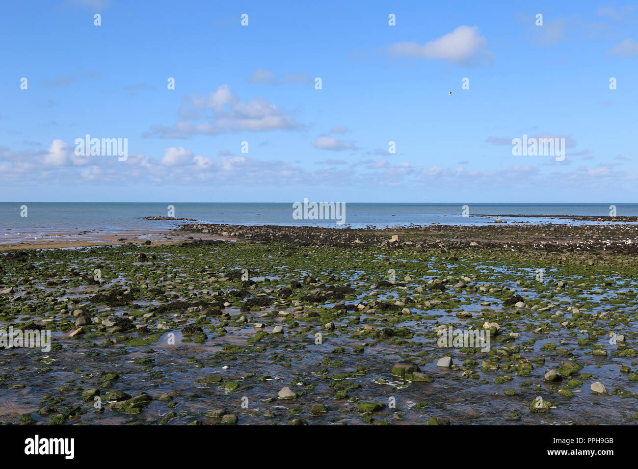 Beach at Llanina Point, New Quay, Cardigan Bay, Ceredigion, Wales, Great Britain, United Kingdom, UK, Europe - Stock Image