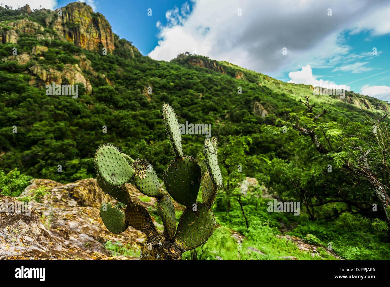 Rancho. Santa Barbara  **** Reserva Monte Mojino (ReMM) de la Natural Culture International (NCI)  Credito:LuisGutierrez Stock Photo