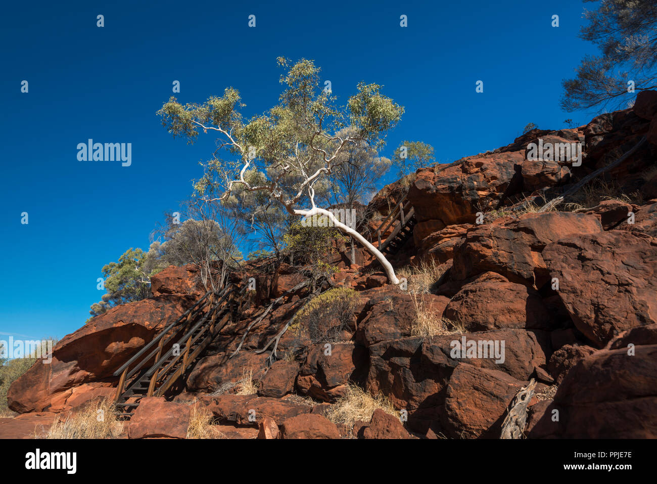 Palm Valley,  MacDonnell Ranges, Nothern Territory, Australia - Stock Image