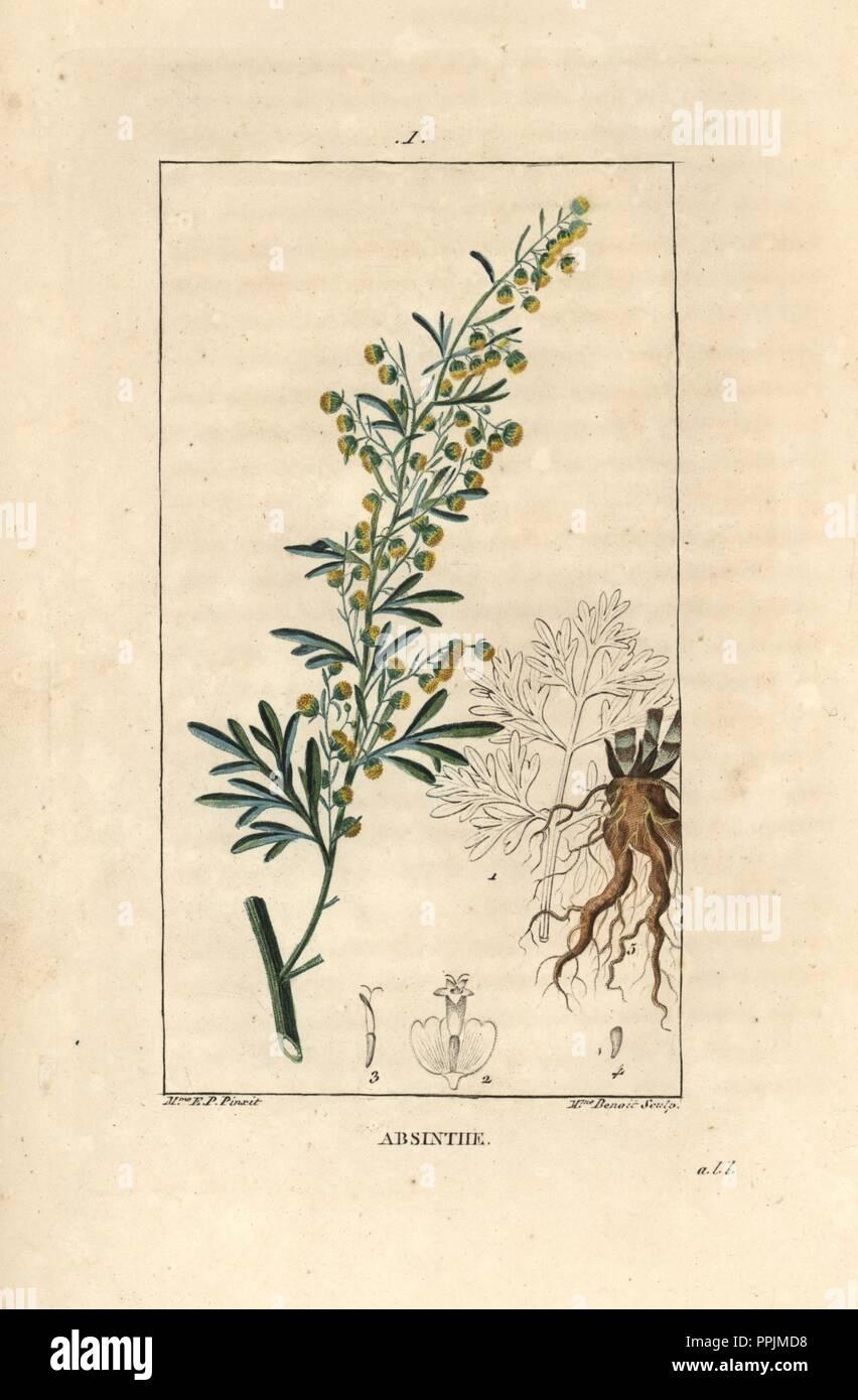 Absinthe Wormwood Artemisia Absinthium Handcoloured