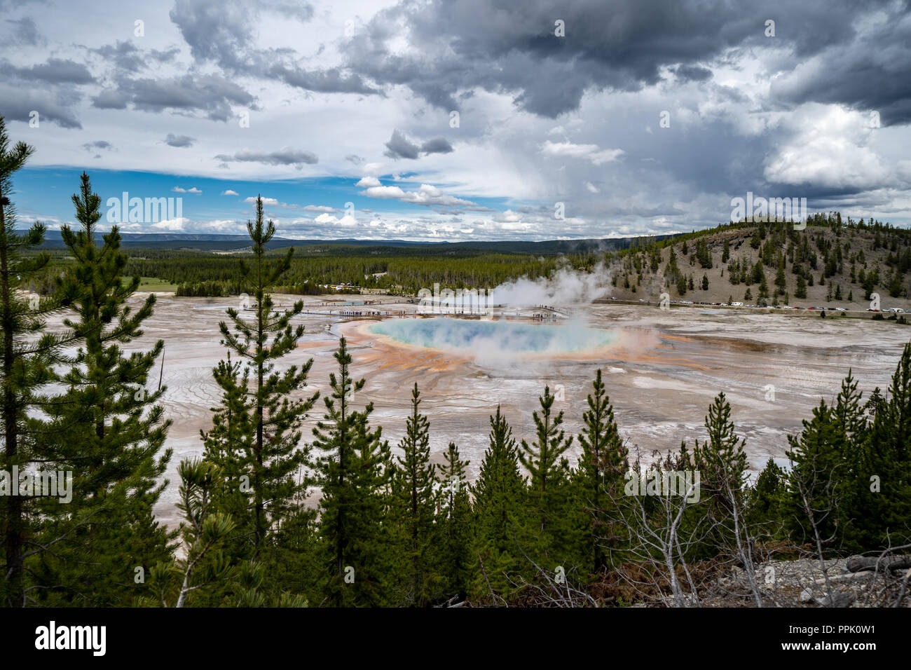 Grand Prismatic Spring in Yellowstone National Park, as seen from the Fairy Falls trail overlook, showing the hot spring's rainbow of colors. Trees fr - Stock Image