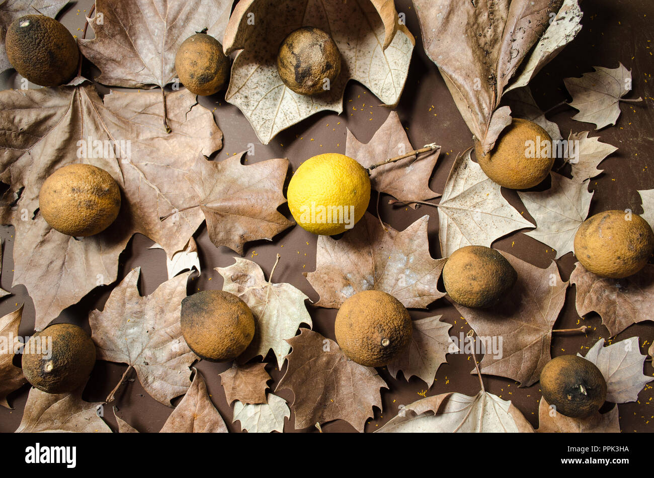 Dried Lemons Stock Photos Dried Lemons Stock Images Alamy