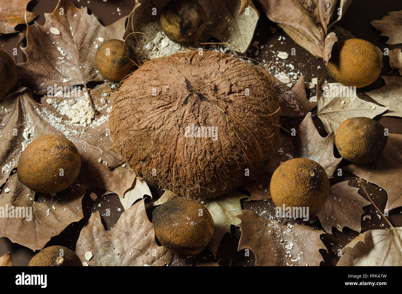 Coconut dry in half on a brown background, surrounded by dry and yellowish lemons, decorated with dried leaves, beautiful background for texts and dec - Stock Image