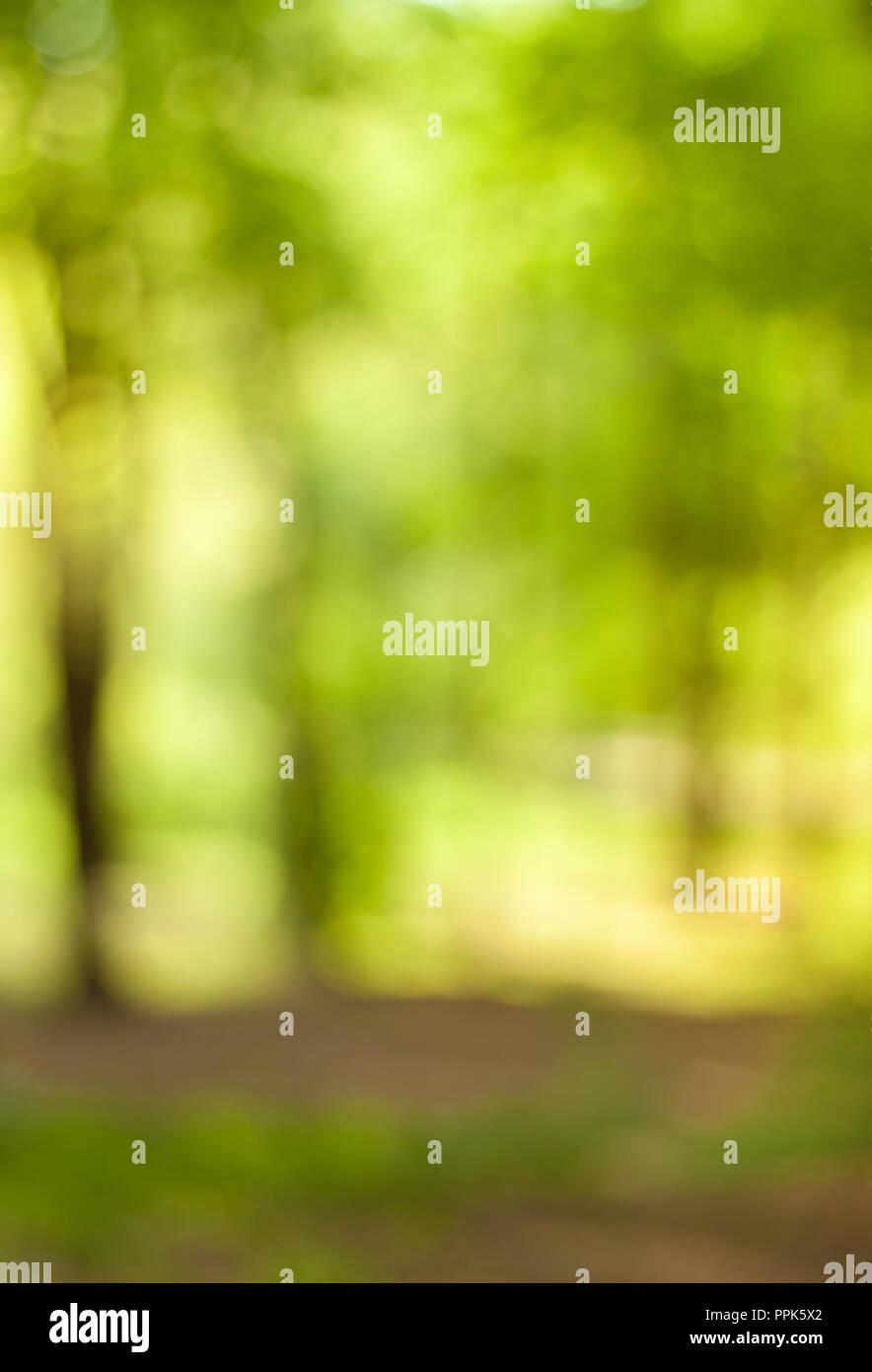 Blurry Nature Wallpaper Forest Bokeh Background Green