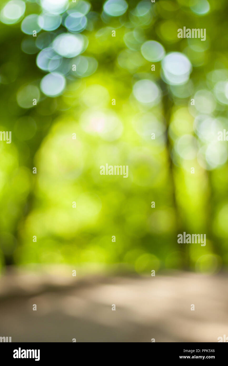 Blurry Nature Wallpaper Forest Bokeh Background Green Defocused