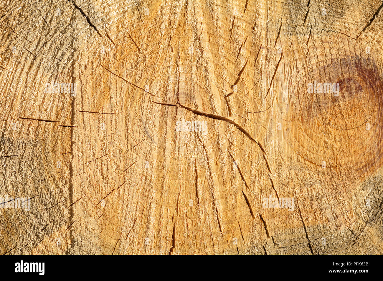 Texture Of Sawn Pine Close Up Natural Wooden Wallpaper