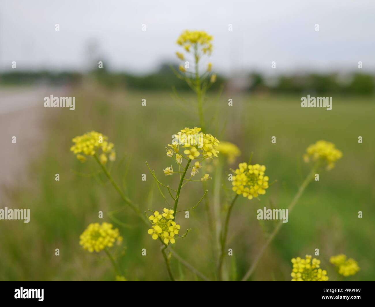 Country Road Wild Flowers - Stock Image