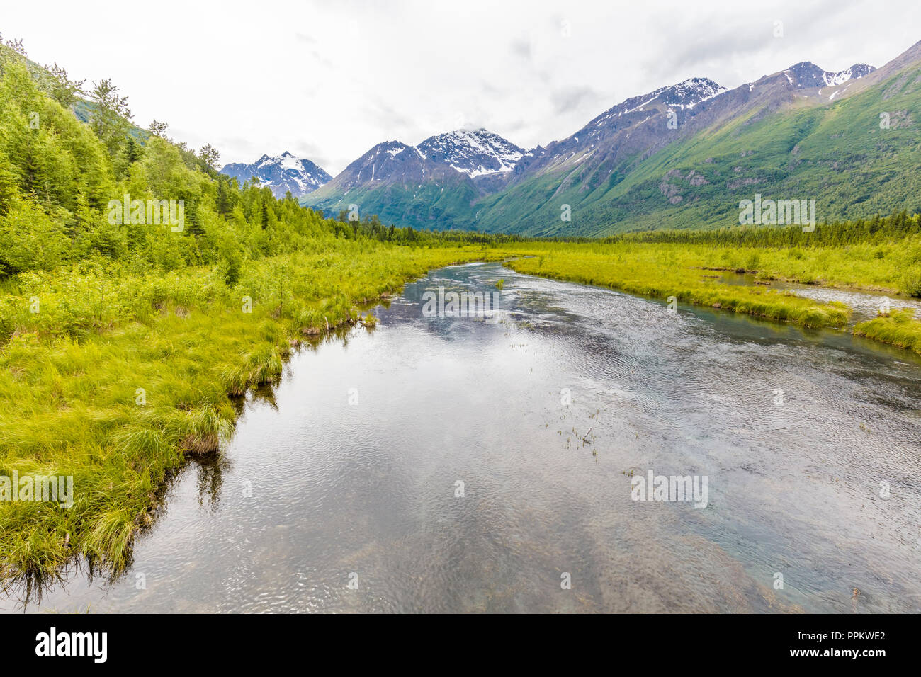 View of freash water spring fed creek in the Eagle River Nature Center in Eagle River Alaska - Stock Image