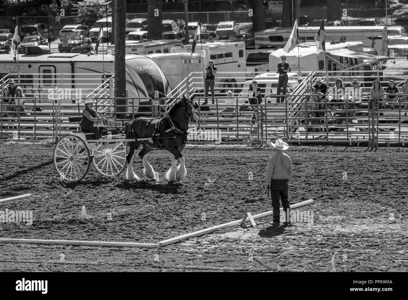 Grass Valley, California, USA. 22 September 2018.  Draft Horse Classic and Harvest Fair at the Nevada County Fairgrounds in Grass Valley. This Classic - Stock Image