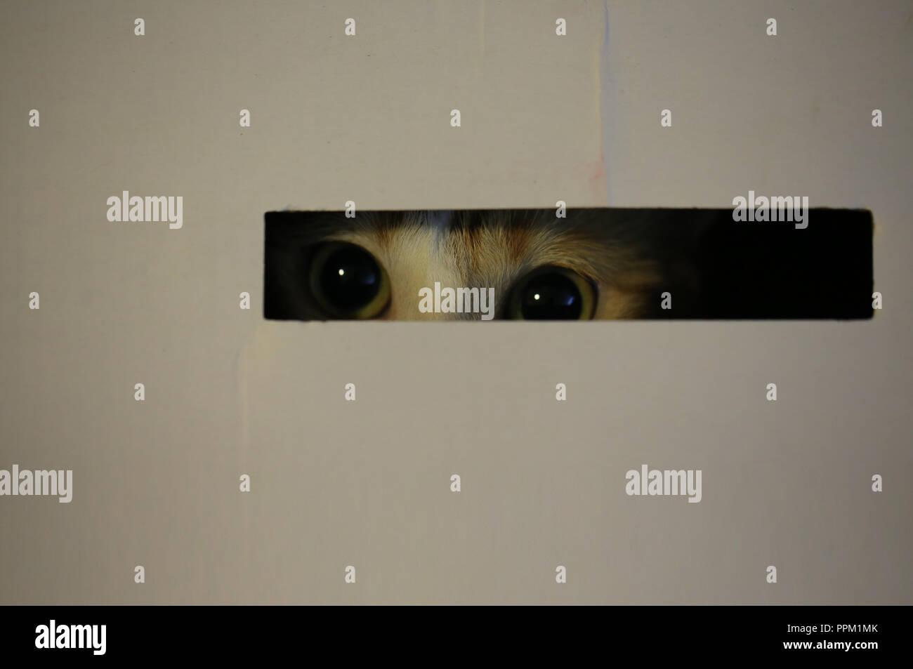 hiding cat - Stock Image