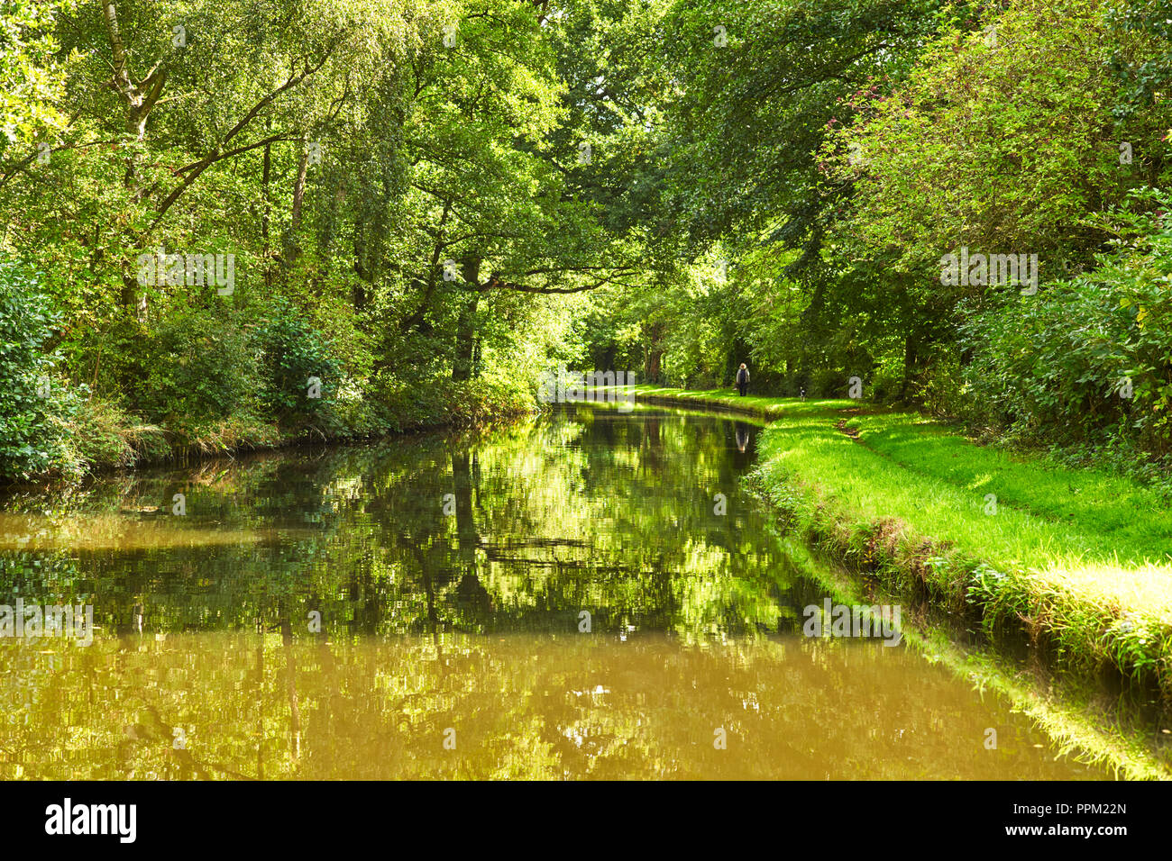 Lush greens of grass, trees and canal with man walking dog in distance on towpath of Shropshire Union canal near Penkridge, Staffordshire - Stock Image