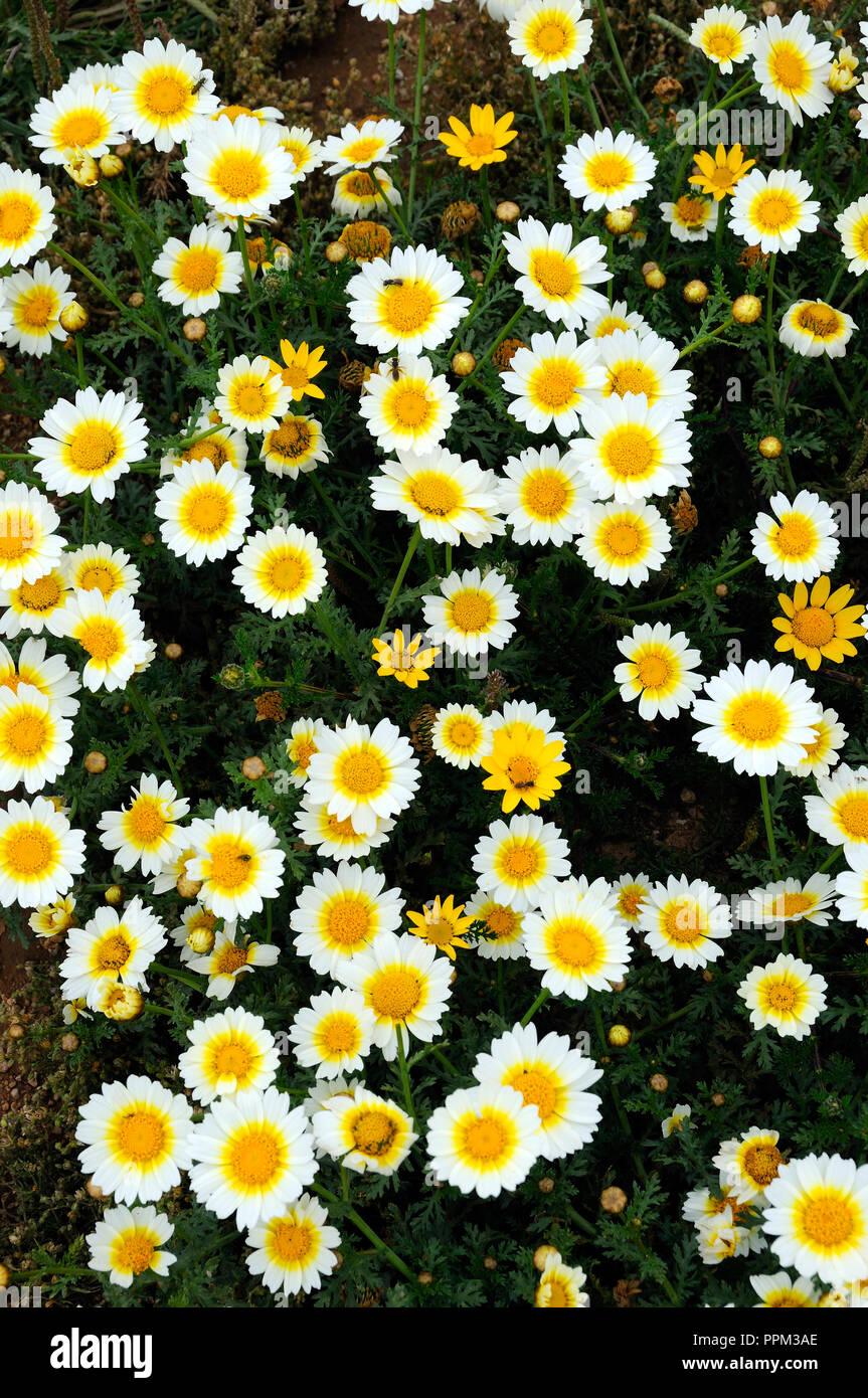 Spring in Algarve. Portugal Stock Photo