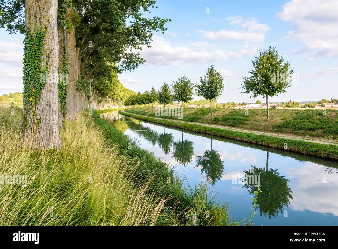 The tree lined canal of the river Marne in France with a towpath and young trees reflecting in the still waters. - Stock Image