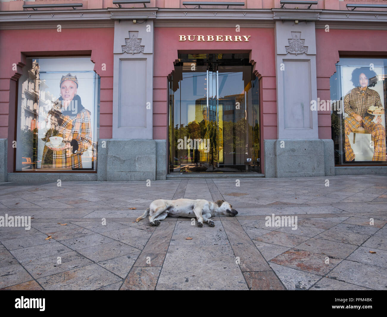 A stray dog snoozes in the shade in front of the Burberry retail store in Freedom Square, Tbilisi, Georgia. - Stock Image
