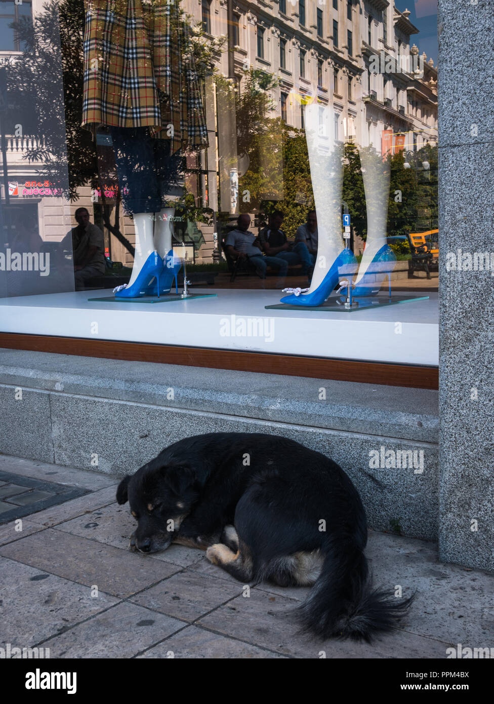 A stray dog snoozes in the shade in front of a window display at the Burberry retail store in Freedom Square, Tbilisi, Georgia. - Stock Image