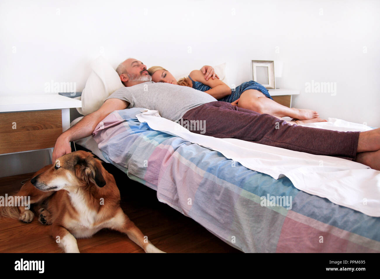 Rough collie dog is lying near to the bed and resting in morning, while his owners are sleeping on the bed in the bedroom. Young happiness couple. - Stock Image