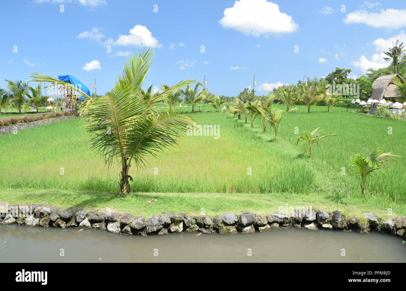 Vivid blue sky and green rice fields in Ubud - Stock Image