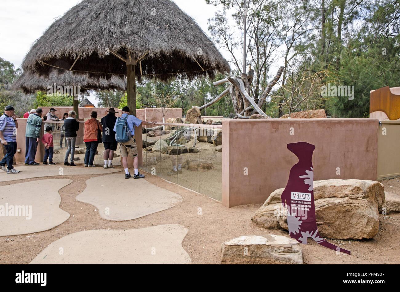 Dubbo Zoo visitors looking at meerkats in their enclosure. Stock Photo