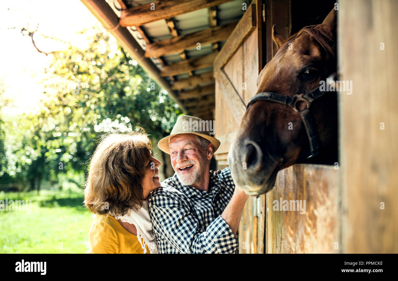 A Senior Couple With A Horse Standing In Front Of A Stable Stock Photo Alamy