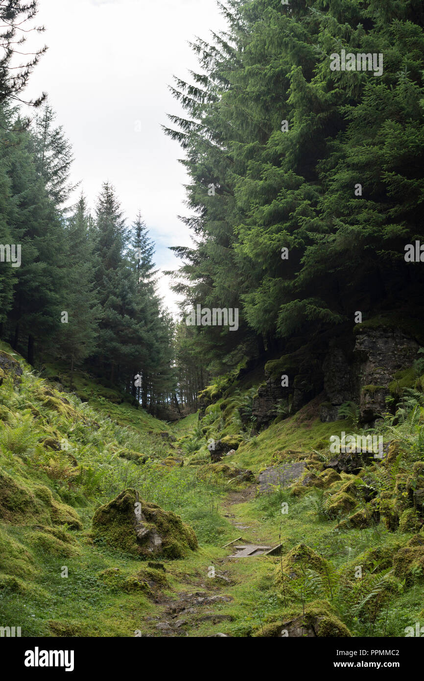 Hazely Hush, a man made valley scoured to reveal lead ore, KIllhope Lead Mine museum, Cowshill, County Durham, England, UK - Stock Image