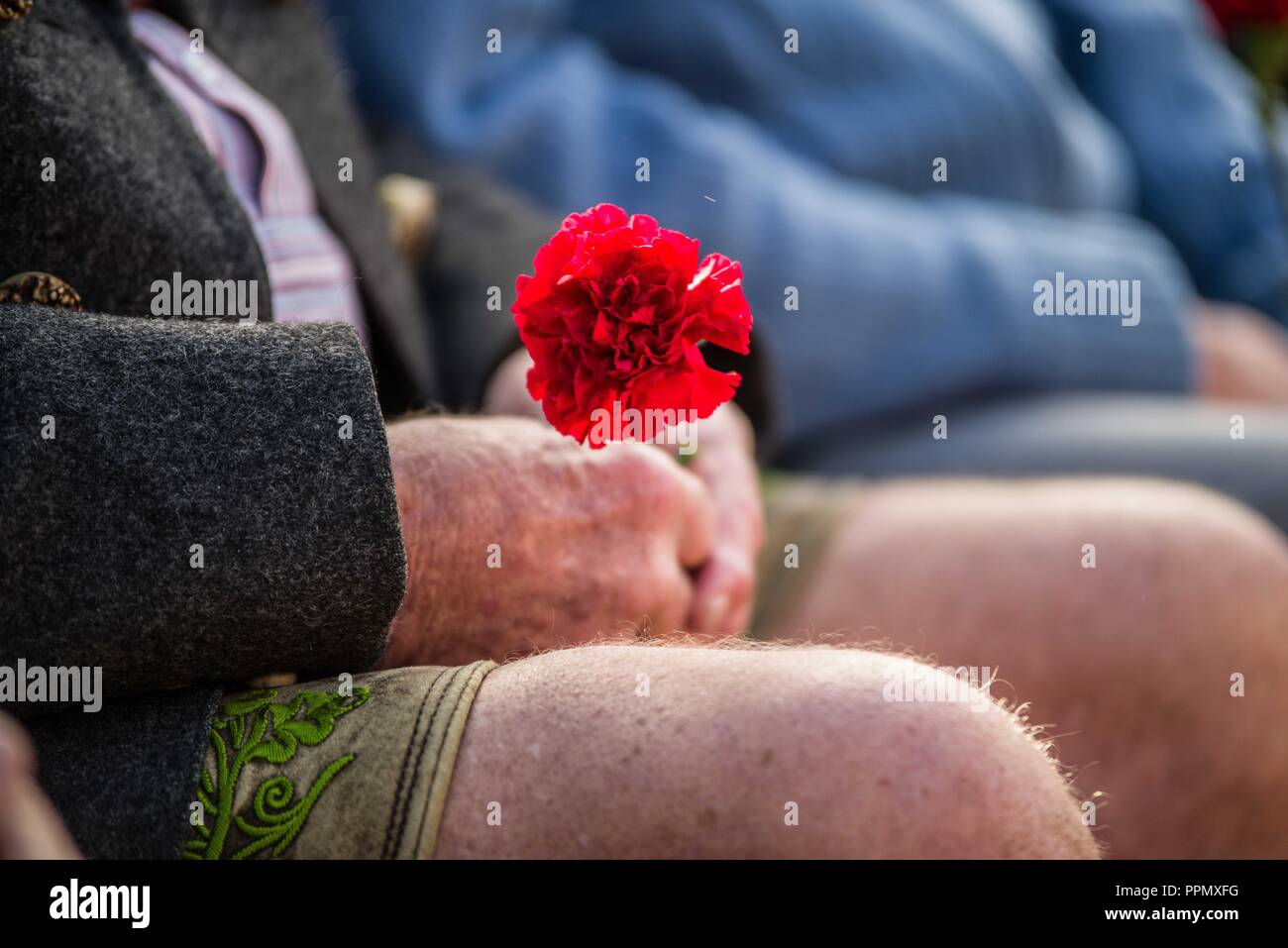 Munich, Bavaria, Germany. 26th Sep, 2018. A man in traditional Bavarian clothing holds a rose for the victims of the 1980 Oktoberfest terror attack. The Oktoberfest terror bombing was carried out by Gundolf Koehler, who died in the bombing, along with thirteen victims. Over 225 were injured. The case remains controversial due to the suspicions that more accomplices remain at large. Credit: ZUMA Press, Inc./Alamy Live News - Stock Image